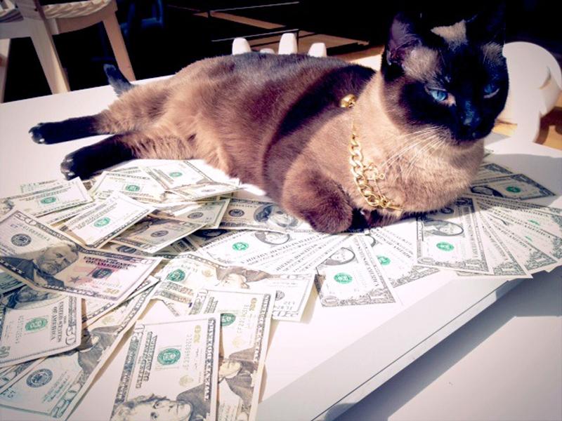 Gatti-coi-soldi-4
